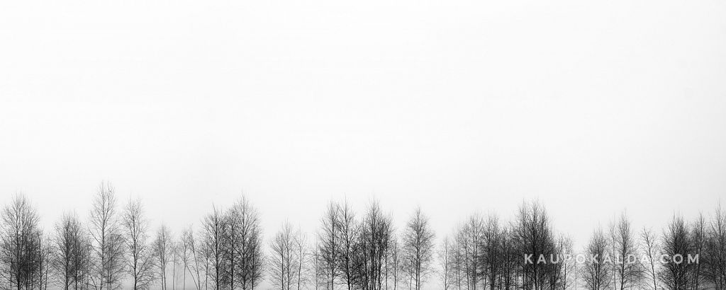 Puud udus