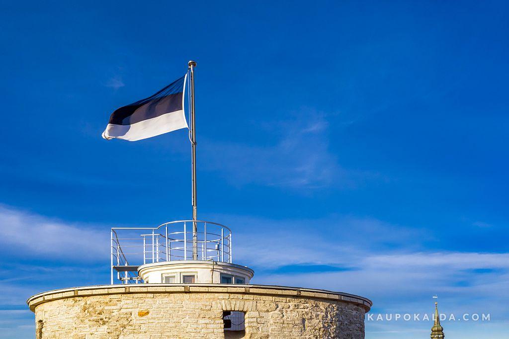 Meie lipp