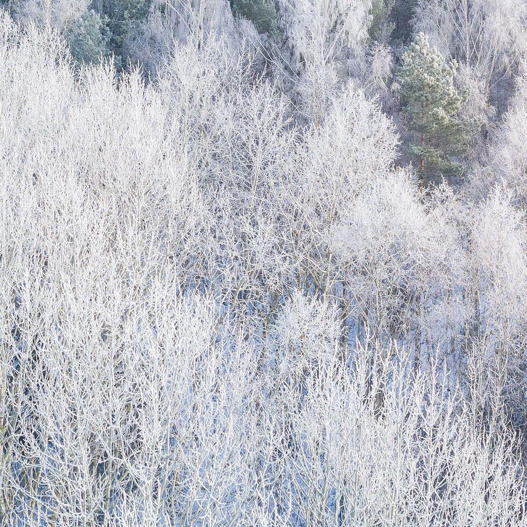DJI-0759-pitsid-mets-talv-crop.jpg